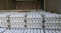 صور : حجز أطنان من البضائع والمواد الغذائية خلال مداهمة مخازن التبريد